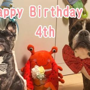 【フレンチブルドッグ イベント】とらじろう 4歳の誕生日♪