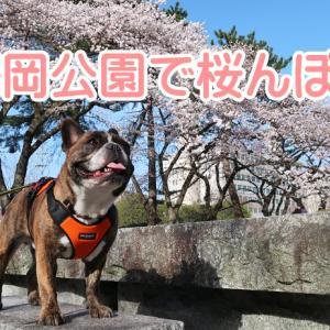 【ワンちゃんとお出かけスポット】榴岡公園で桜んぽ♪