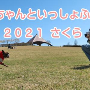 【イベント】わんちゃんといっしょふぉと 2021 さくら♪