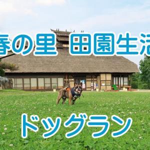 【ワンちゃんとお出かけスポット】三春の里 田園生活館でドッグラン♪