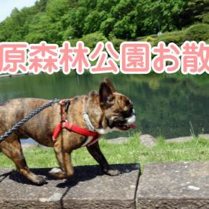 【フレンチブルドッグ】お散歩~プロのシャンプー