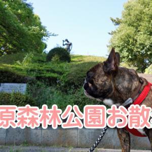 【フレンチブルドッグ】ネコの元気草栽培開始~お散歩