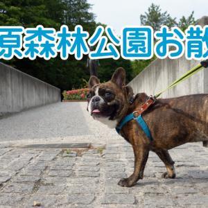 【フレンチブルドッグ】お散歩~ホタルを見る会の告知
