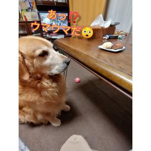 ウマウマ(^з^)-☆