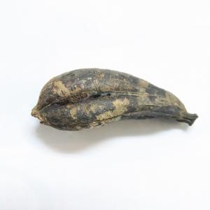 アガベ アメリカーナ オアハカセンシス(モンスターアガベ)の種子