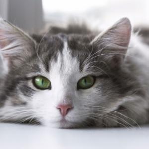 猫に遊びは必要ですか?猫が遊ぶ理由から猫の遊びの終わり方まで解説します!!