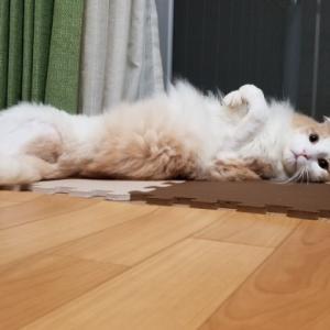 猫のリハビリと猫との気ままな暮らしについて