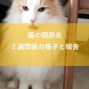 猫の関節炎発症から2週間後の様子と報告について