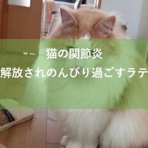 猫の関節炎の痛みから解放されたラテちゃんの様子と報告について