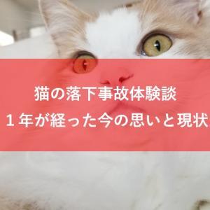 猫の落下事故から1年が経過!今の思いと現状について