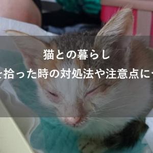 【実体験談】子猫を拾ったときの5つの対処法と注意点について
