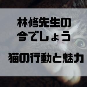 【林修の今でしょう】をみて改めて猫の行動に癒しや魅力を感じた話