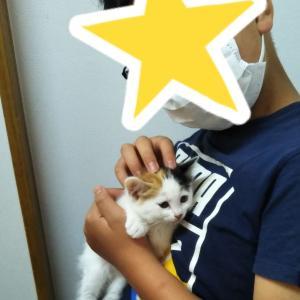 保護猫ひじき(仮名)