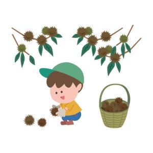 子供と一緒に栗拾い!農園でのマナーとケガをしない為に必須の持ち物は?