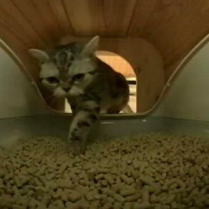 toletta2使用レポート〜尿量計測の不可状況と猫砂について〜