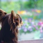 犬の安楽死の選択について〜方法や費用、最期の時まで!