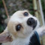 犬の骨折!手術〜退院までの経過や完治までの期間について!
