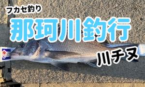 那珂川で川チヌ!