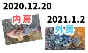 【内房・外房】岩井袋公園下の地磯、興津港