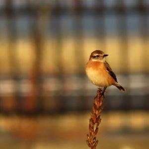 野鳥観察 ウォーキングにて 10.23