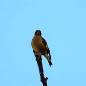 野鳥観察 ウォーキングにて 12.09