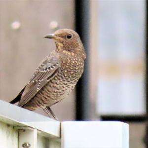 野鳥観察 ウォーキングにて 7.19