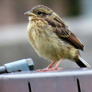 野鳥観察 ウォーキングにて 7.24