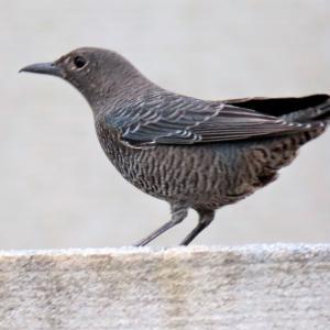 野鳥観察 ウォーキングにて 10.24