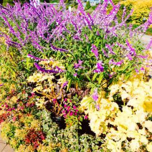 週明け恒例!花を見に行きました!「はままつフラワーパーク」/「めぐり逢い」Andre Gagnon