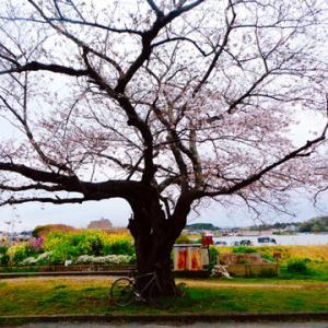 それでも桜は咲きます・・・「角松敏生/After 5 Crash」