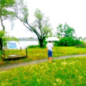 民主主義の危機・・・土砂降りの「佐鳴湖」/浜田省吾/雨の日のささやき
