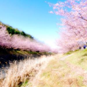 浜松市西区大山町河津桜祭り/大河悠久-TOGI+BAO