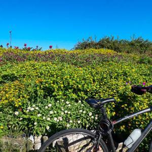 猛暑日!実家から舘山寺から浜名湖自転車ロード!/North Shore Serenade-Na Leo