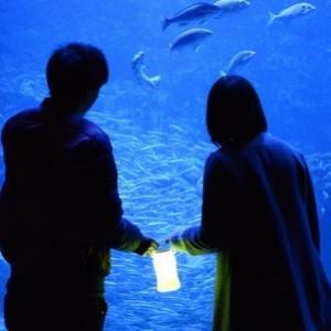 家族連れで賑わう定番はここ!わくわくがとまらない夜の京都水族館【京都イベント】