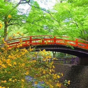 もみじは秋だけじゃない!鮮やかな緑色が美しい御土居の青もみじ【京都イベント】