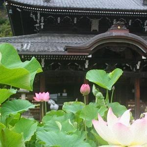 花が好きな人におすすめ!色鮮やかなつつじ・しゃくなげ園【京都イベント】