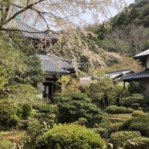 春の京都には魅力がいっぱい!3回目の開催となる安楽寺の春の特別公開【京都イベント】