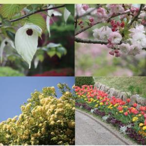 桜の見納めは数多くの八重桜!宇治市植物園の八重桜ウィーク【京都イベント】