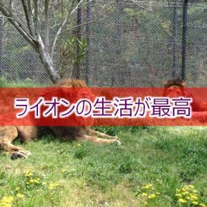 理想はライオンの生活 自然に生きる