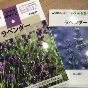 イングリッシュラベンダー、収穫と剪定、ちょっと遅かった?枯れさせたくない!葉が茶色に…。NHK趣味の園芸「ラベンダー」も2冊購入!