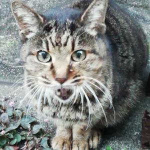 「ナーゴ、ナーゴ♪」長崎の猫は可愛か、ばってん坂はきつか‼