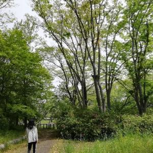 緑の道を歩きカッコウの声を聞く日々