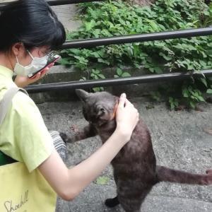 【拡散希望‼】一生モノ!尾道猫の「奇跡の一枚!」~「反省!」する猫さん