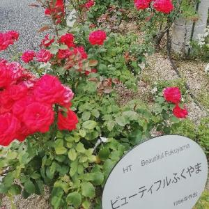 今回も「希望の灯」を心に「薔薇の街福山」を去る