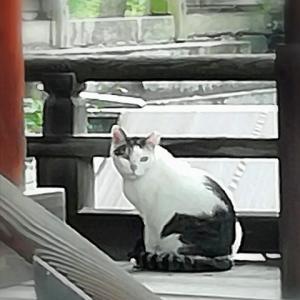 「時をかける少女」が出会った「艮神社」の巫女猫と「ユトレヒト」の窓猫~ 脳脊髄液減少症快癒を願い尾道訪問