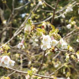 咲き出した春・・・(^^♪