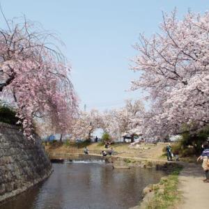 川崎でお花見だ・・(^^♪