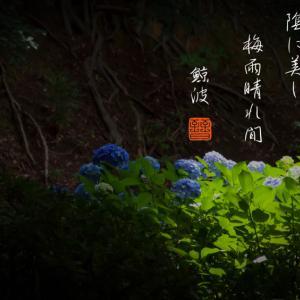 紫陽花や陰に美し梅雨晴れ間