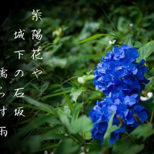 紫陽花や城下の石坂濡らす雨