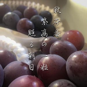 秋本番紫高の一粒照る朝日